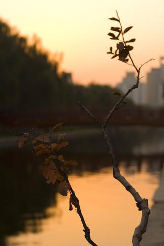 lake_sunset.jpg